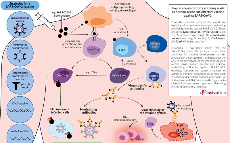 Respuestas inmunes para SARS-CoV-2 y Desarrollo de una vacuna